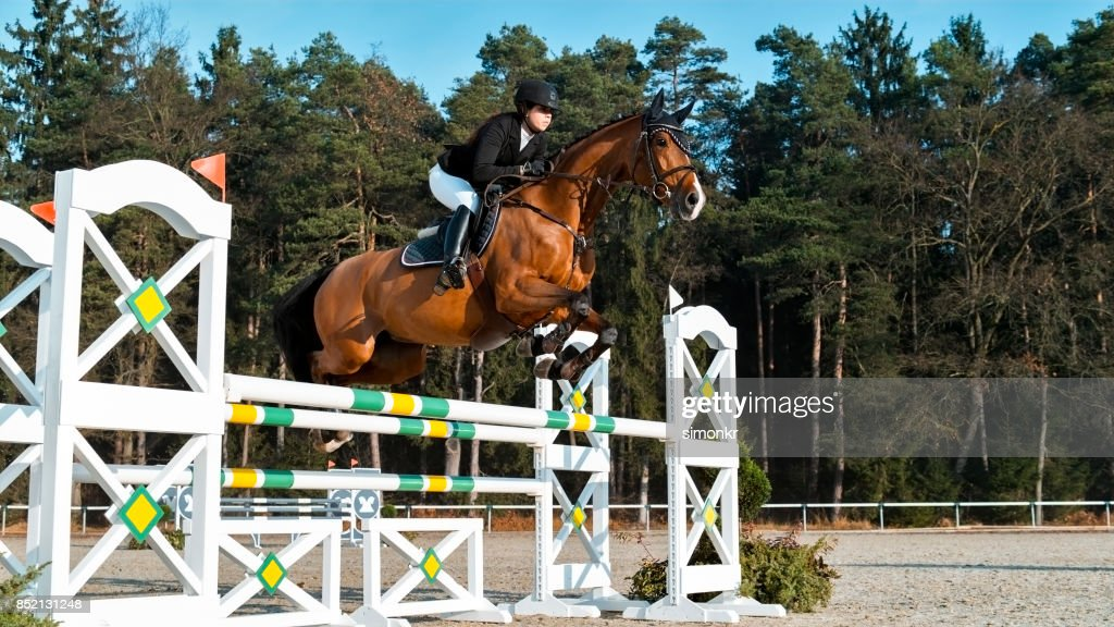 Chestnut Horse And His Rider Jumping An Oxer High Res Stock Photo Getty Images