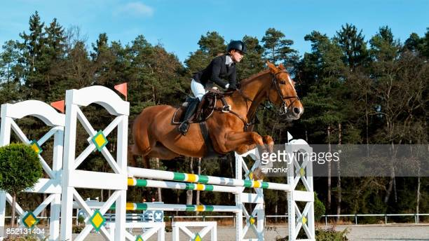 chestnut horse and his rider jumping an oxer - steeplechasing horse racing stock photos and pictures