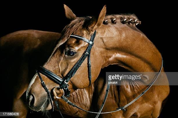 chestnut cavalo retrato - thoroughbred horse - fotografias e filmes do acervo