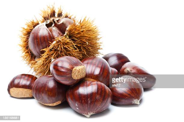 Chestnut on white