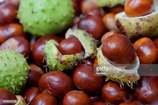 chestnut - kastanie laubbaum stock-fotos und bilder