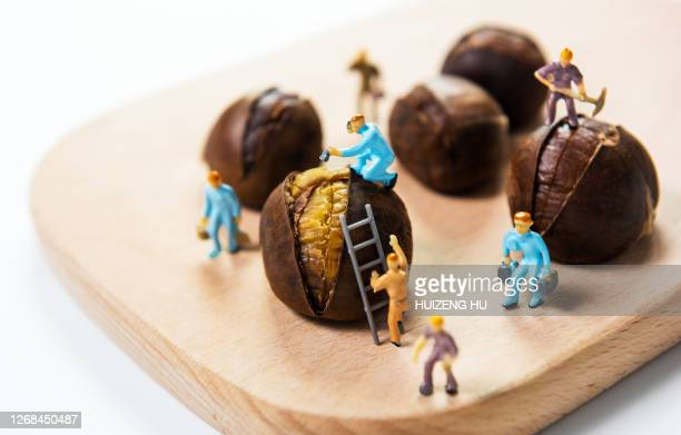 chestnut worker creativity - nuts models stock pictures, royalty-free photos & images