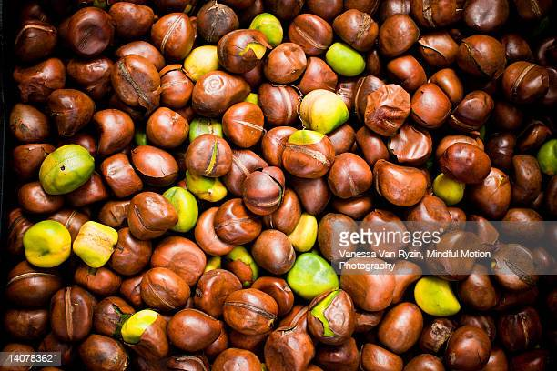 chestnuts - vanessa van ryzin stock photos and pictures