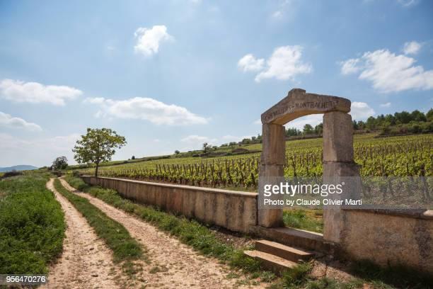 Chevalier-Montrachet Vineyards, Burgundy, France