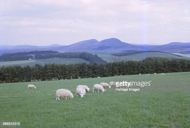 Cheviots South of Jedburgh Scotland 20th century Rolling hills straddling the AngloScottish border primarily associated with geological activity from...