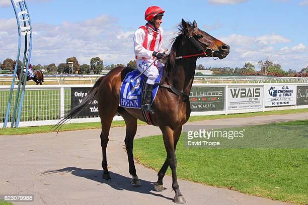 Chew Toy ridden by Bradley Vale returns to the mounting yard after winning Killawarra Kennels & Cattery BM58 Handicap on November 14, 2016 in...