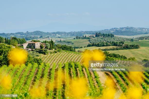 chianti region, green vineyards in summertime. tuscany, italy - italian currency stock pictures, royalty-free photos & images