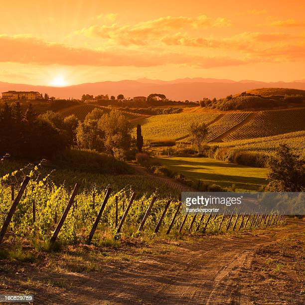 Chianti Region hills at sunset in Tuscany - Italy