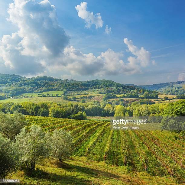 Chianti region landscape in Italy