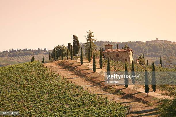 Chianti Volpaia Vineyard in Sunset
