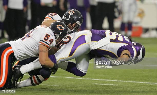 Chicago Bears linebacker Brian Urlacher and linebacker Hunter Hillenmeyer take down Minnesota Vikings tight end Jermaine Wiggins in the 2nd half of...