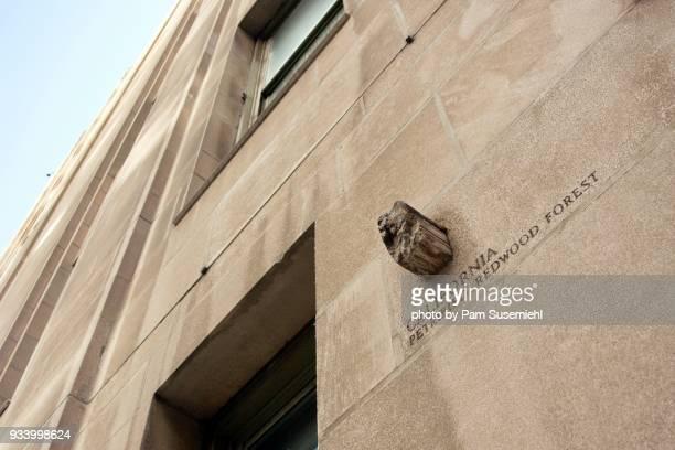 chicago, il - tribune tower facade, petrified redwood from california - inclinando se - fotografias e filmes do acervo