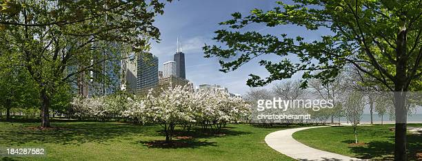 Chicago park and John Hancock building in spring