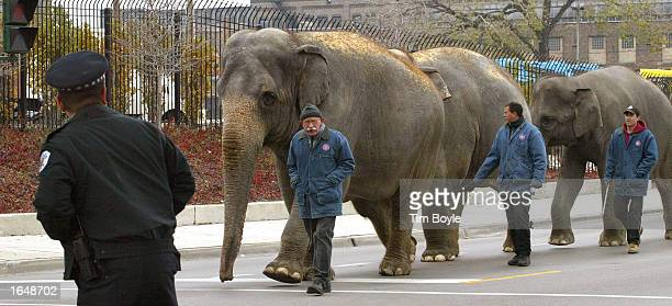 Chicago Police officer left looks down a row of passing elephants and their handlers from Ringling Bros and Barnum Bailey circus as they walked down...