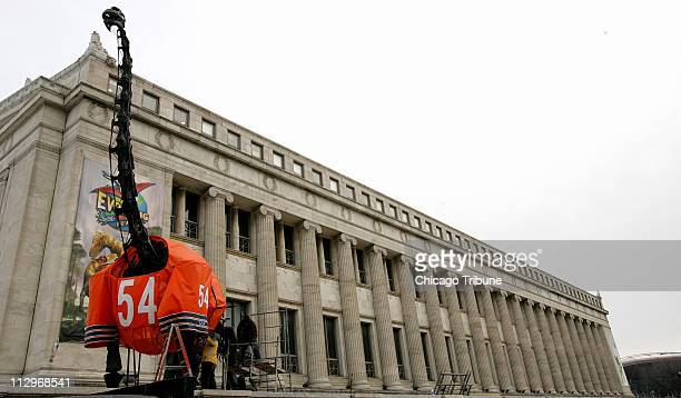 Chicago Scenic Studios outfit the Brachiosaurus outside the Field Museum with a Brian Urlacher jersey Wednesday January 31 in Chicago Illinois