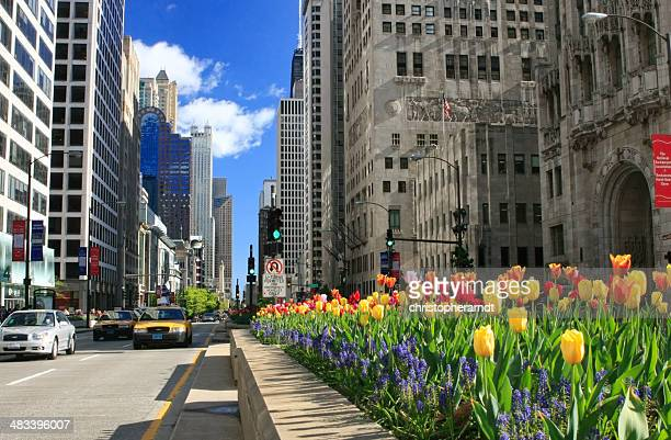 Chicago's Magnifcent Mile in Bloom