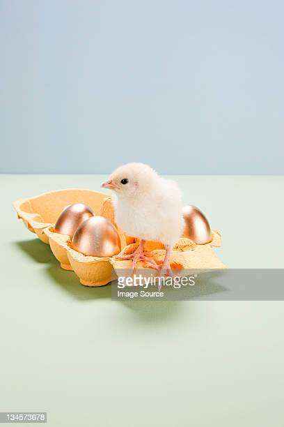 Chick standing on box of golden eggs
