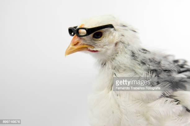 Chick with glasses