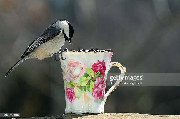 Chickadee perched on teacup