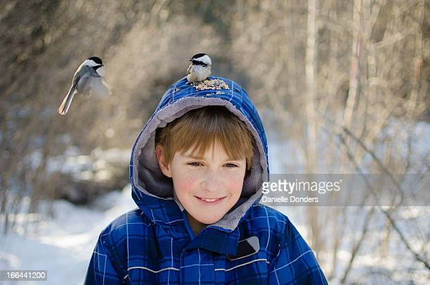 Chickadees eating seeds from top of a boy's head