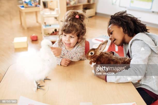 Chicken an rabbit in daycare