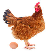 Chicken and egg.