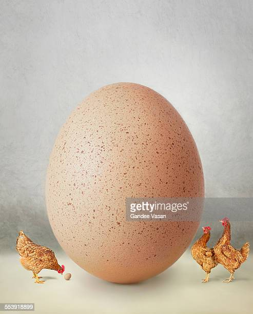 Chicken and giant egg