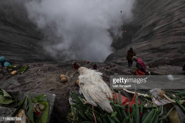 Chicken caught by villag is tethered after thrown by Tenggerese worshippers during the Yadnya Kasada Festival at crater of Mount Bromo on July 18...