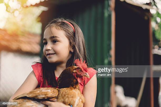 chicken coop - chicken coop stock pictures, royalty-free photos & images