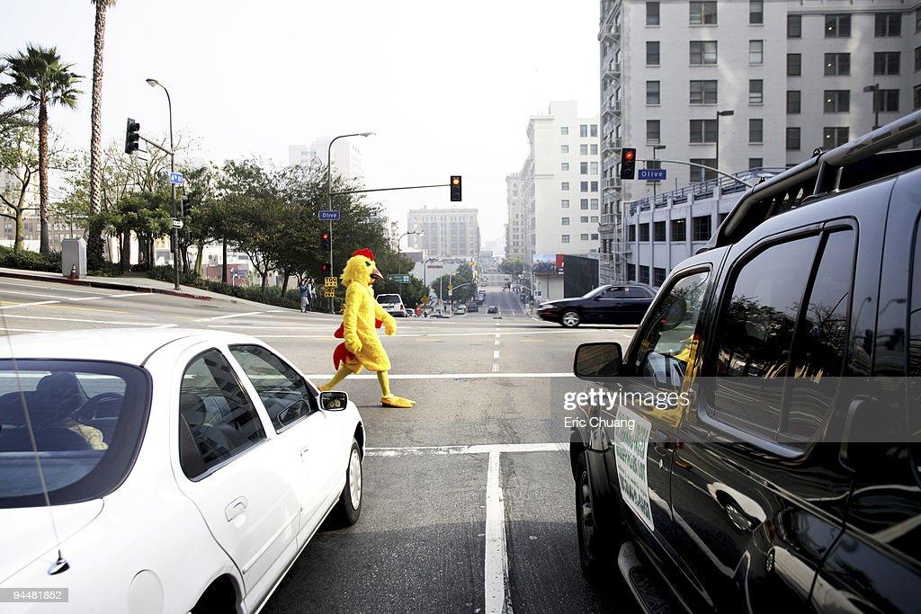 Chicken crossing road : Stock Photo