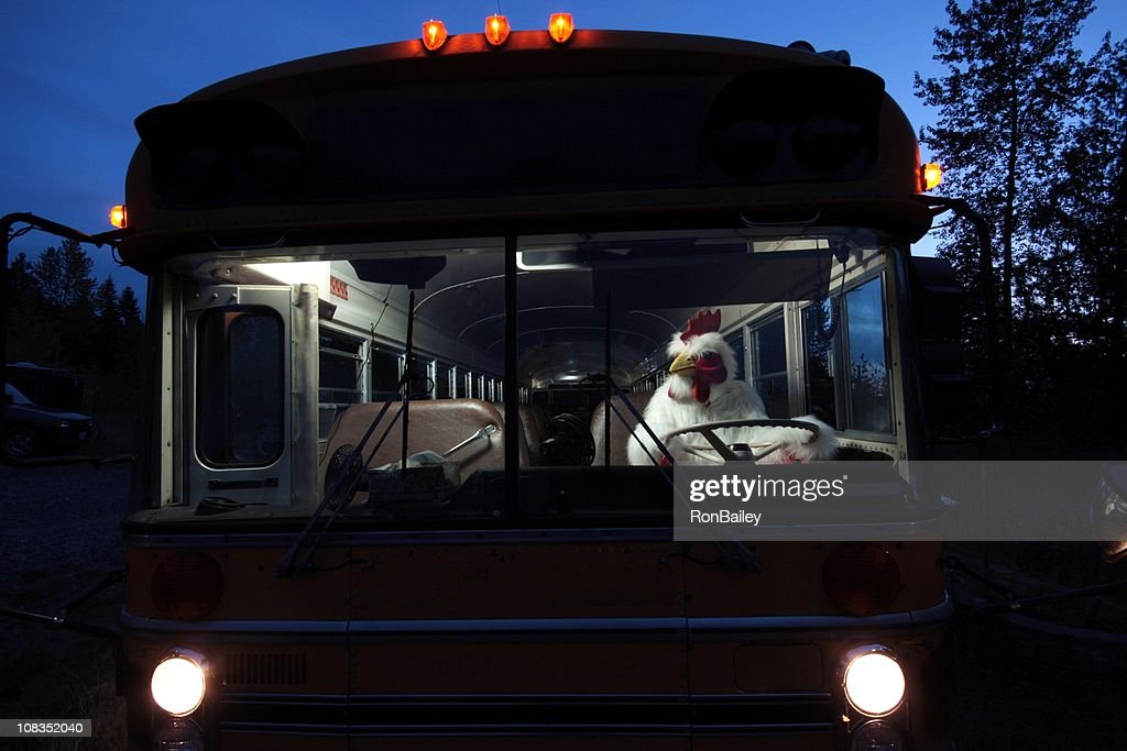 Chicken Driving a School Bus : Stock Photo
