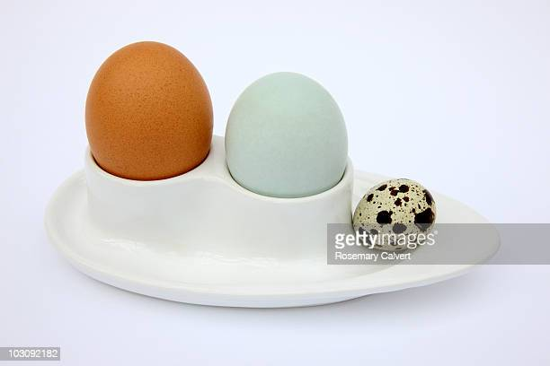 Chicken, duck and quail egg in egg cup.