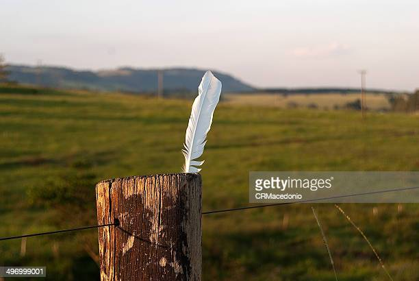 chicken feather - crmacedonio stock photos and pictures