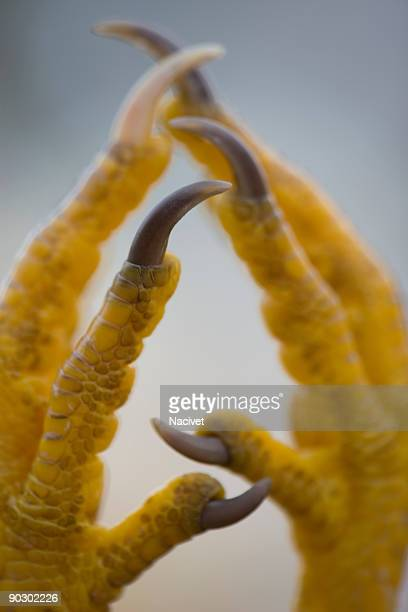 Chicken feet with hope position, selective focus
