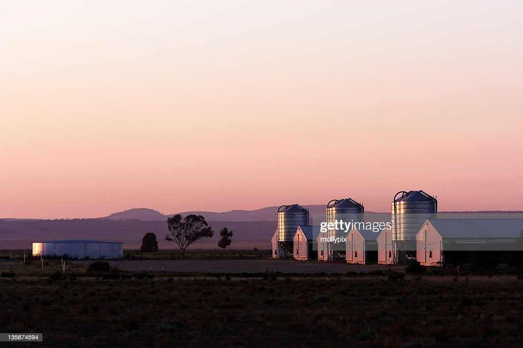 Chicken Growing Sheds : Stock Photo