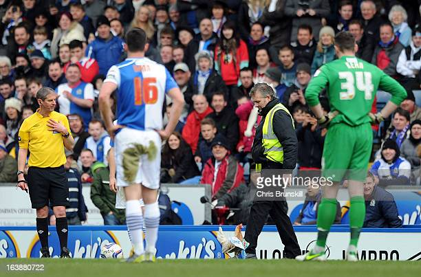 A chicken is released on the pitch during the npower Championship match between Blackburn Rovers and Burnley at Ewood park on March 17 2013 in...