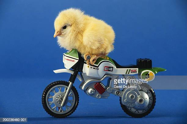 Chicken on toy motorcycle, side view