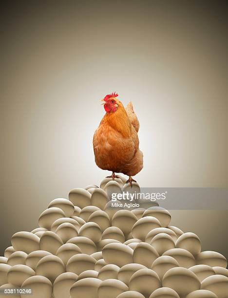 chicken sittling big on stack of eggs - mike agliolo stock pictures, royalty-free photos & images