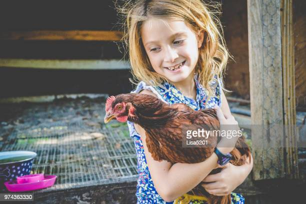 chicken tamer - domestic animals stock pictures, royalty-free photos & images