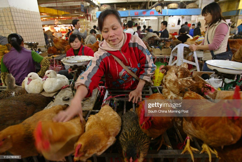 Chicken vendors in the biggest wet market in Tongman are doing soaring trade. Chicken are the traditional dish for the Chinese Lunar New Year. 14 JANUARY 2004 : Foto di attualità