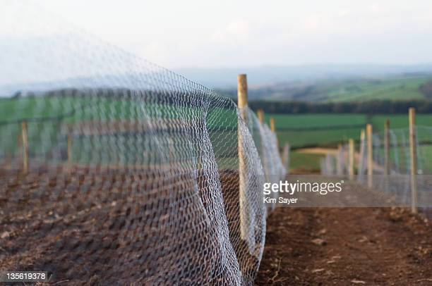 Chicken Wire Fencing Marking Out Plots at Rural Allotments, UK