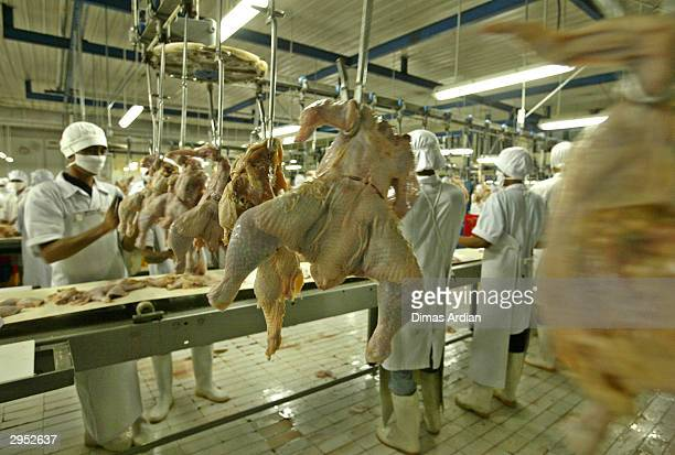Chickens are prepared for the table in a slaughterhouse February 9 2004 outside Jakarta Indonesia Governments across South East Asia have been trying...