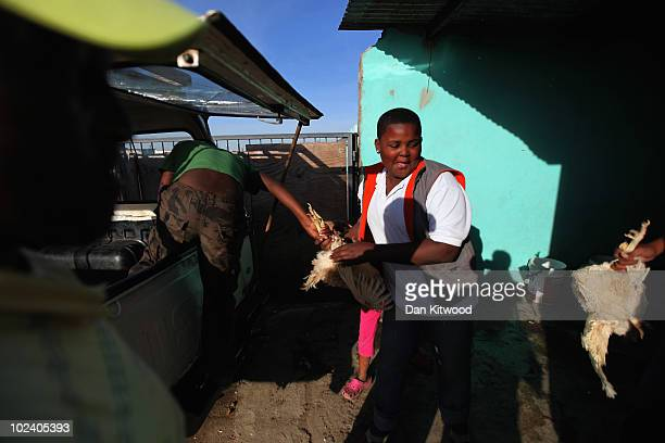 Chickens are removed from a truck in the New Brighton Township on June 24, 2010 in Port Elizabeth, South Africa. The New Brighton Township was...