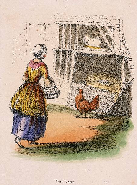 chickens collecting eggs from nest from graphic illustrations of