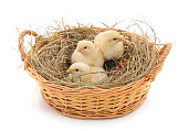 https://www.istockphoto.com/photo/chickens-in-the-basket-gm1011738390-272589697