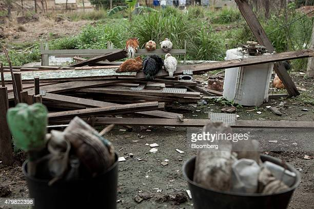 Chickens sit on a pile of discarded lumber in the Dilma Rousseff favela of Rio de Janeiro Brazil on Monday July 6 2015 As the fastest inflation in...