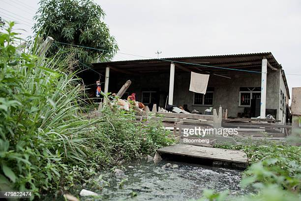 Chickens sit on a pile of discarded lumber outside of a home in the Dilma Rousseff favela of Rio de Janeiro Brazil on Monday July 6 2015 As the...