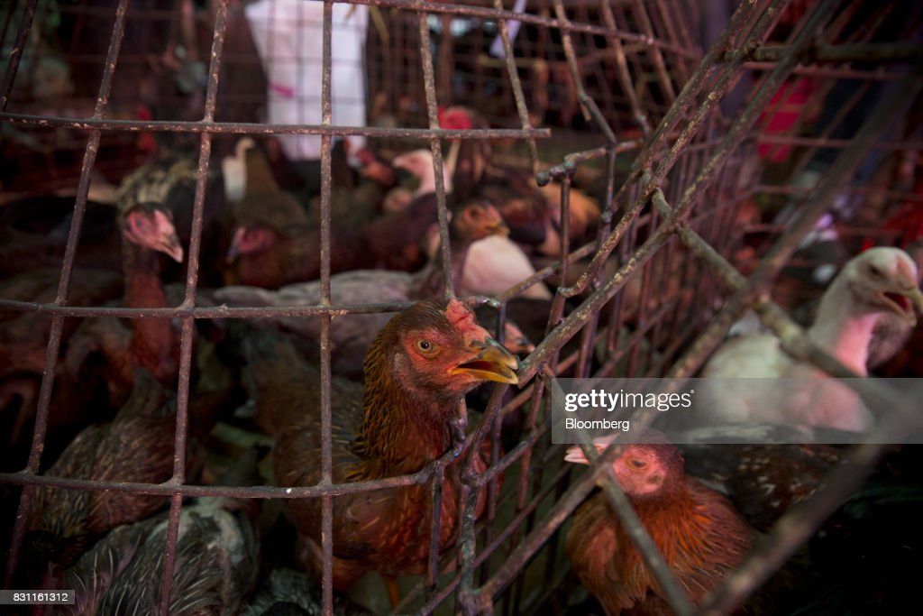 Chickens stand inside cages at Khlong Toei Market in Bangkok, Thailand, on Saturday, Aug. 12, 2017. Thai Beverage, the spirits giant that makes Chang beer and SangSom rum, is expanding into the fast-food business to take advantage of the rising appetite for fried chicken in Asia. ThaiBev agreed to purchase more than 240 existing KFC restaurants in Thailand for about 11.3 billion Thai baht ($340 million). Photographer: Brent Lewin/Bloomberg via Getty Images