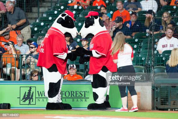 Chickfila mascot cows on the field prior to a MLB baseball game between the Houston Astros and the Boston Red Sox on June 17 2017 at Minute Maid Park...