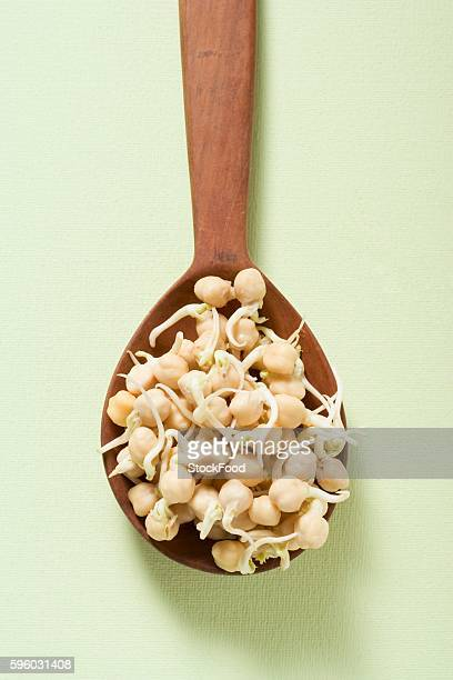 Chick-pea sprouts on wooden spoon (overhead view)